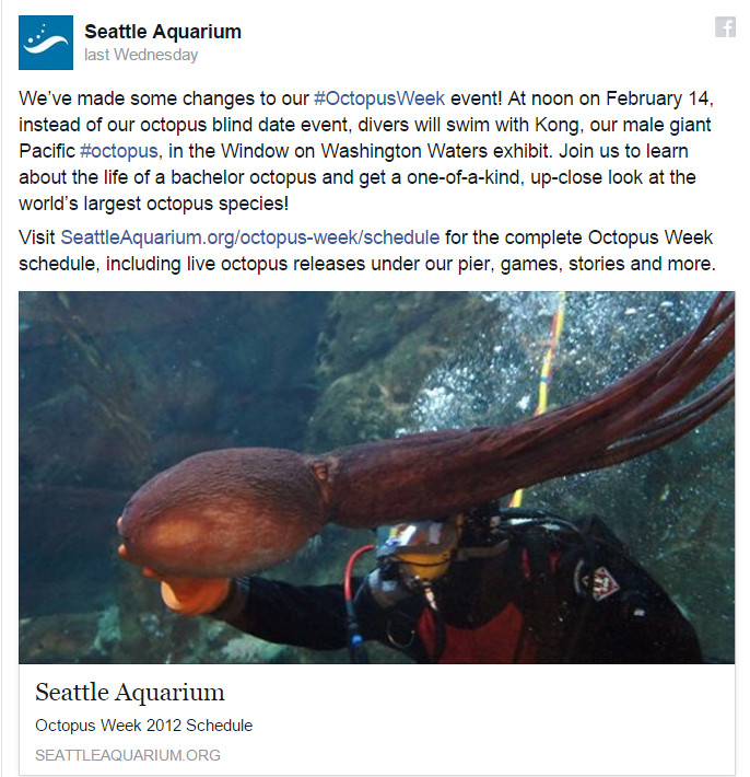 Seattle Aquarium, Octopus